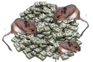dinero y ratas